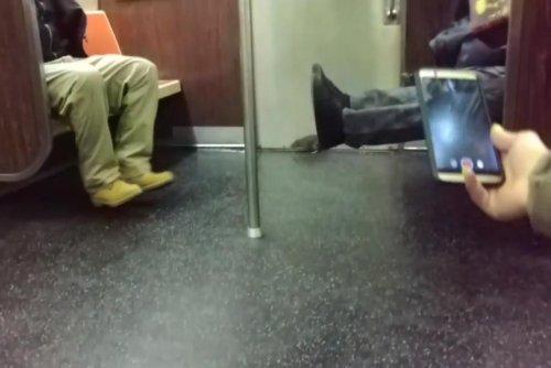 Subway-riding rat causes chaos on New York train