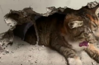 Cat rescued from between factory walls