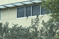 Iguana peeks in through second-floor window of Florida police station