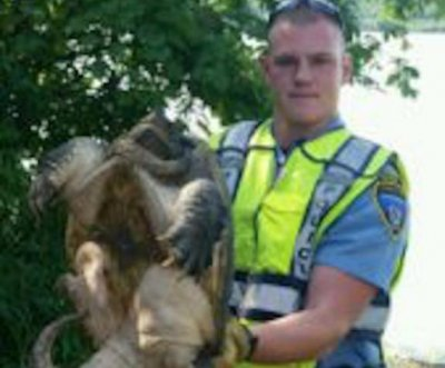 Minnesota officer rescues large highway-crossing turtle
