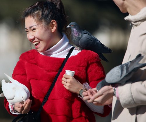 Pigeons are better than people at multitasking
