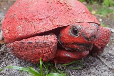 Tortoise found covered in red spray paint in Florida