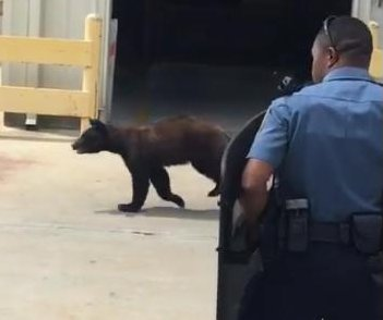 Police recorded chasing young bear outside Georgia business