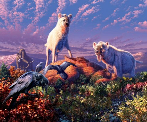 Fossil teeth show packs of hyenas roamed the ancient Arctic