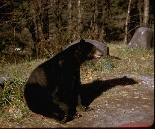 DNA evidence shows officials euthanized wrong bear after attack