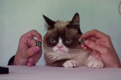 Grumpy Cat measured for Madame Tussauds animatronic