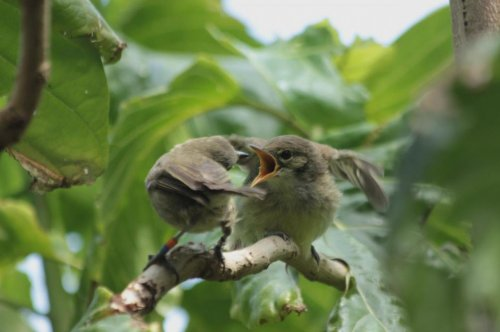 Birds help raise other's offspring with the expectation of future benefits