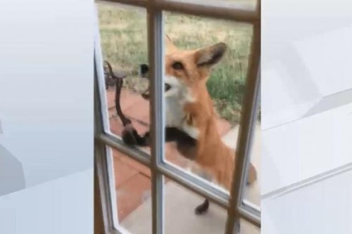 Fox tries to open door to Kansas woman's shop