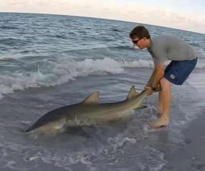 Florida kayaker hooks lemon shark, brings it to shore