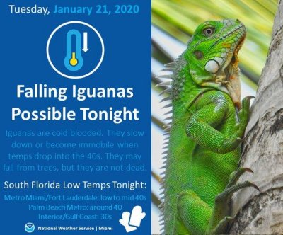 National Weather Service warns of falling iguanas Miami