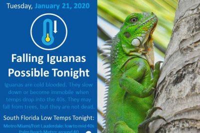 National Weather Service warns of falling iguanas in Miami