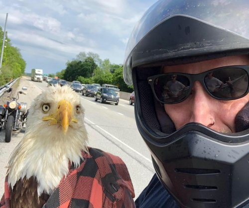 Pennsylvania motorcyclist rescues injured bald eagle in the road