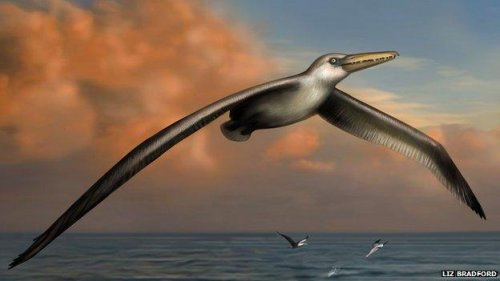 Scientists confirm largest ever flying bird species