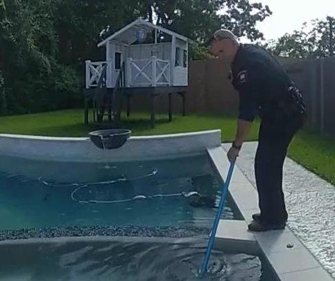 Police remove trespassing alligator from resident's hot tub