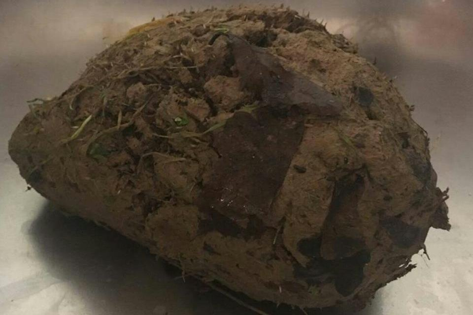 Animal hospital finds ball of mud was 'barely recognizable' hedgehog