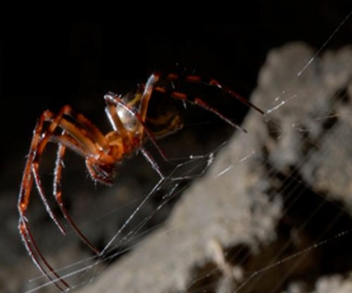 Graphene makes spider silk even stronger