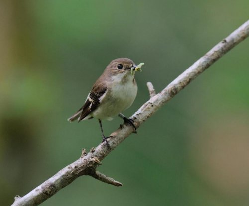 Hungry birds are missing out on their favorite insects as a result of climate change