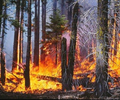 New study finds surprising culprit drives forest fire behavior
