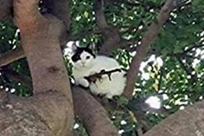 Oregon police respond to report of cat armed with gun-shaped stick