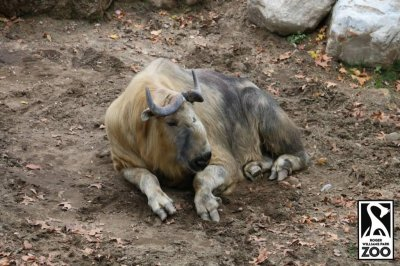 Large animal temporarily escapes Rhode Island zoo enclosure
