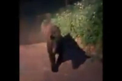 Watch:-Bear-tries-to-get-into-home-in-Colorado