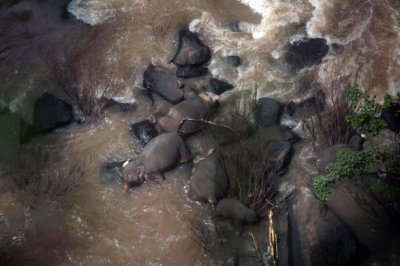 Thai park rangers find 5 more elephants dead; toll up to 11