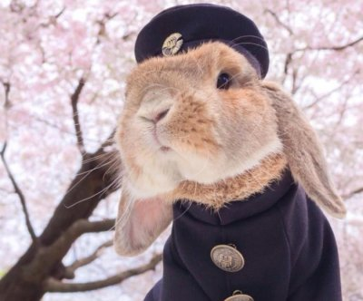 PuiPui the bunny dresses in dapper handmade clothing