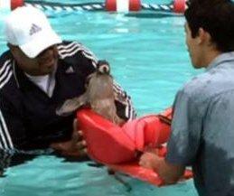 Diving deer interrupts children's swimming class in California