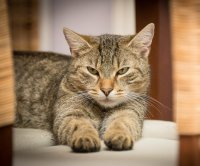 Study confirms cases of human-to-cat COVID-19 transmission