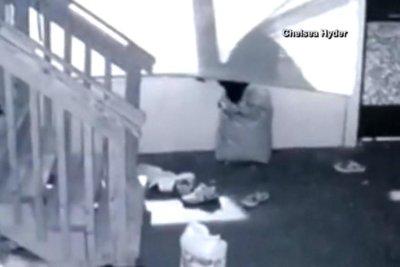 Bear reaches through window, steals dog food