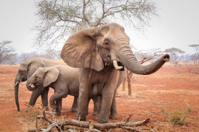Wildlife groups petition Hong Kong to crack down on illegal ivory trade