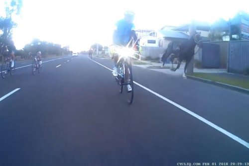 Escaped horses chase cyclists down the highway