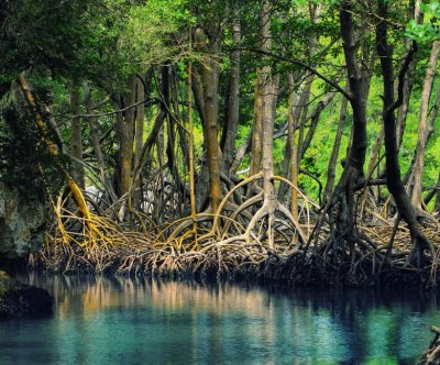 Without carbon emissions reductions by 2050, mangroves unlikely to survive