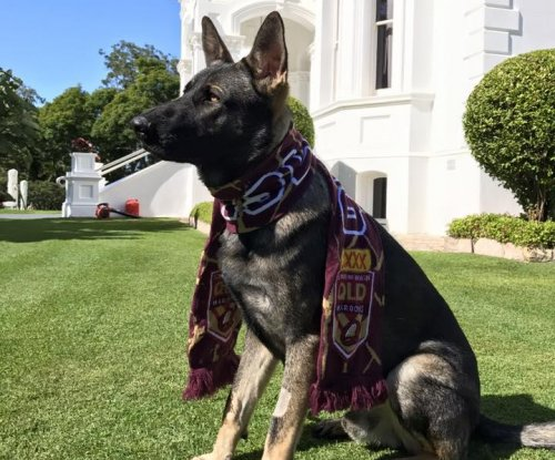 Australian dog 'too friendly' for police force given government position