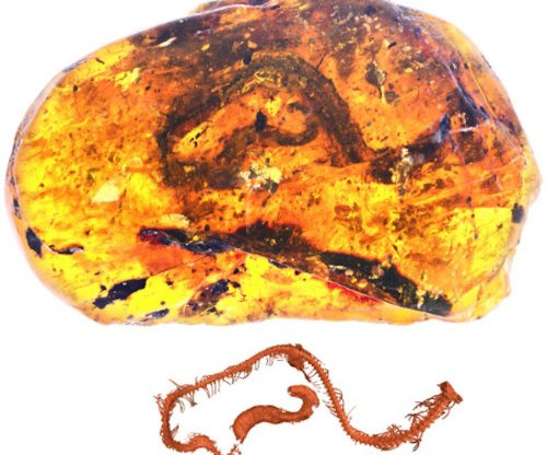 Snake entombed in amber offers insights into early serpent evolution