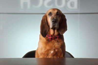 Busch beer offers $20,000 for a canine 'chief tasting officer' to sample Dog Brew