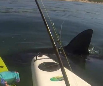 South Africa kayakers capture close encounter with great white shark