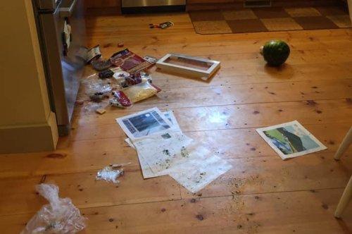Bear breaks into Vermont home, ransacks kitchen
