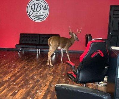 Deer crashes through front window of Pennsylvania salon