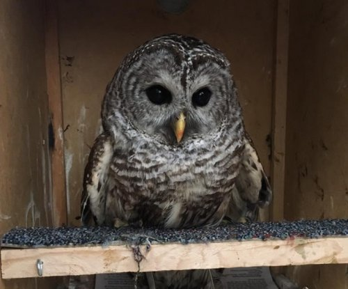 Injured owl rescued from side of road by Massachusetts police sergeant