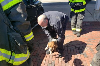 Beagle survives 40-mile drive while stuck under owner's vehicle