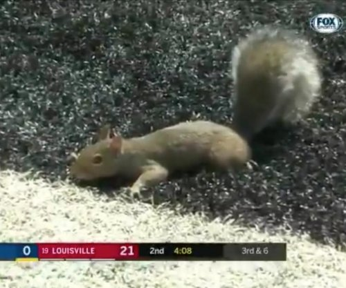 Squirrel interrupts Kent State-Louisville game with 'touchdown' sprint