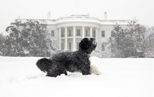 First dog makes online pitch for Obama