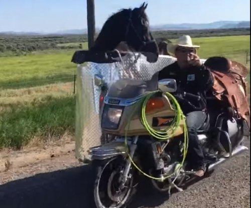 Man creates motorcycle side car to transport horse