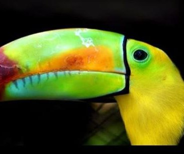 Bird keepers chase sightings of escaped toucan