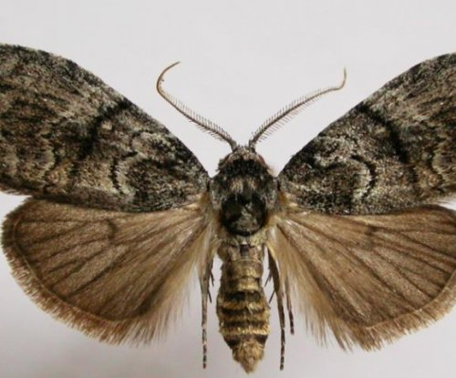 Moth study suggests females prefer a mate who is a good listener