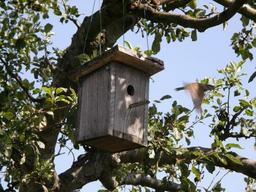 Archbishop sends bird houses to churches