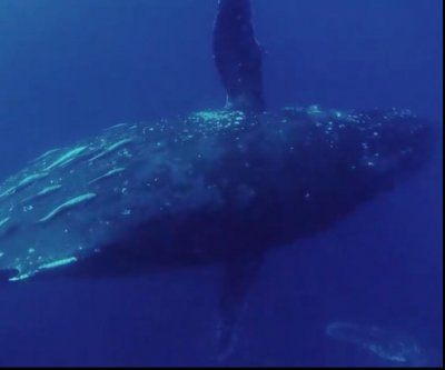 Australian charter boat has unexpected whale encounter