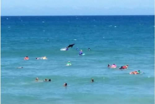 Shark photobombs mom surfing competition