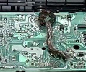 Electrician finds dead snake in malfunctioning PlayStation 4